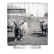 Highland Cattle  Shower Curtain