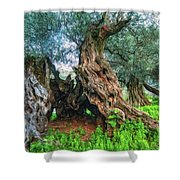 Old Olive Tree Shower Curtain