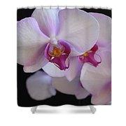 7195-orchids Shower Curtain