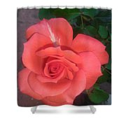 Orange Rose Shower Curtain