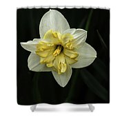 A Beautiful Narcissus Shower Curtain