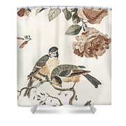 A Blue Tit And A Great Tit By Johan Teyler   1648  1709  2 Shower Curtain