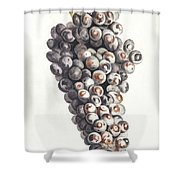 A Bunch Of Grapes By Johan Teyler  1648-1709  Shower Curtain
