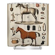 A Chromolithograph Of Horses With Antique Horseback Riding Equipments   1890  Shower Curtain