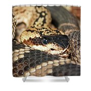 A Close Up Of A Mojave Rattlesnake Shower Curtain