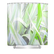 A Conflagration Of Flax Shower Curtain