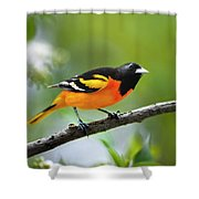 A Look To Remember Shower Curtain