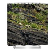 A Mother Mountain Goat And Her Kid Above Avalanche Lake Shower Curtain by Belinda Greb