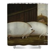 A Pair Of Pigs Shower Curtain