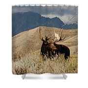 A Really Big Moose Shower Curtain