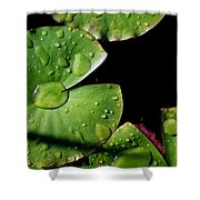 A Red Leaf Among The Water Lily Pads Shower Curtain