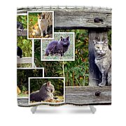 A Variety Of Cats Shower Curtain
