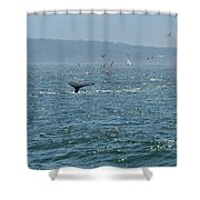 A Whale's Tail Above Water With Sail Boat In The Background Shower Curtain
