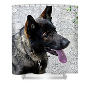 Absolute Loyalty Shower Curtain