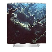 Acropora Coral Shower Curtain