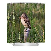 Adult Burrowing Owl Shower Curtain