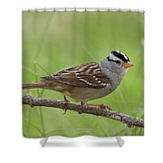 adult White-crowned Sparrow Shower Curtain