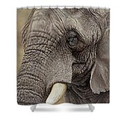 African Elephant Shower Curtain by Alan M Hunt
