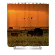 African Elephants Walking At Golden Sunrise Shower Curtain