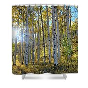 Afternoon Aspens Shower Curtain