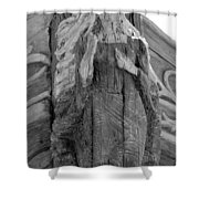 Albatross Fine Art Masthead Shower Curtain