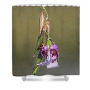Alligator Flag Shower Curtain by Jody Lane