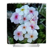 Alpine Rockjasmine Up Close Shower Curtain