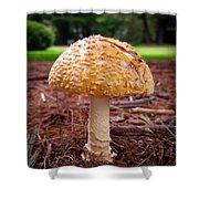 Amanita Fungus Shower Curtain