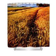 Amber Waves Of Grain Painting  Shower Curtain