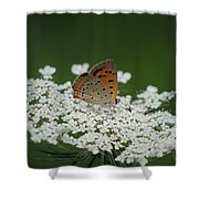 American Copper On Queen Anne's Lace Shower Curtain