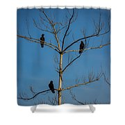 American Crows In Bare Tree Shower Curtain