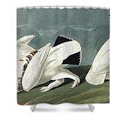 American Ptarmigan, Tetrao Mutus, White Tailed Grous, Tetrao Leucurus Shower Curtain