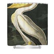 American White Pelican, Pelecanus Erythrorhynchos By Audubon Shower Curtain