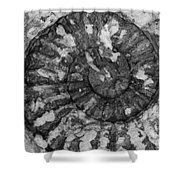 Ammonite Fossil Bw Shower Curtain