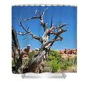 Ancient Dead Juniper With Character Shower Curtain