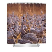 And One Sings Out Shower Curtain