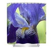 Angie's Iris Shower Curtain