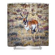 Antelope Buck 2 Shower Curtain