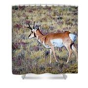 Antelope Buck Shower Curtain