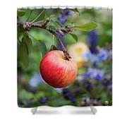 Apple On The Tree Shower Curtain