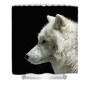 Arctic Wolf In Profile Shower Curtain by Susan Rissi Tregoning