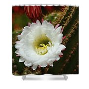 Argentine Giant White Flower And Red Bud Shower Curtain
