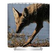 Arizona Coyote  Shower Curtain