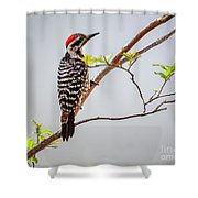 Arizona Ladderback Woodpecker Shower Curtain