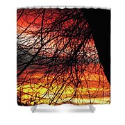 Arizona Sunset Through Branches Shower Curtain
