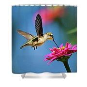 Art Of Hummingbird Flight Shower Curtain