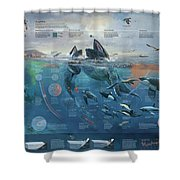Artwork Depicting The Marine System Of The Pacific Coast. Shower Curtain
