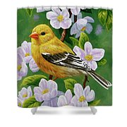 Female American Goldfinch And Apple Blossoms Shower Curtain