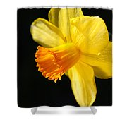 Sunny Yellows Of A Spring Daffodil  Shower Curtain