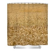 A Field Of Wheat Shower Curtain